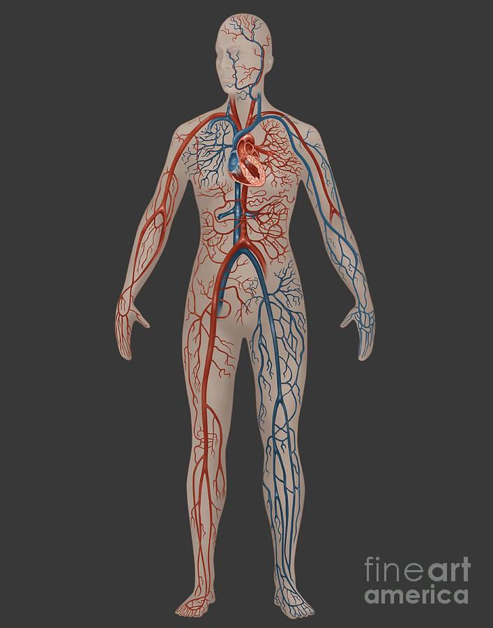 Female anatomy photographs 598647 - follow4more.info