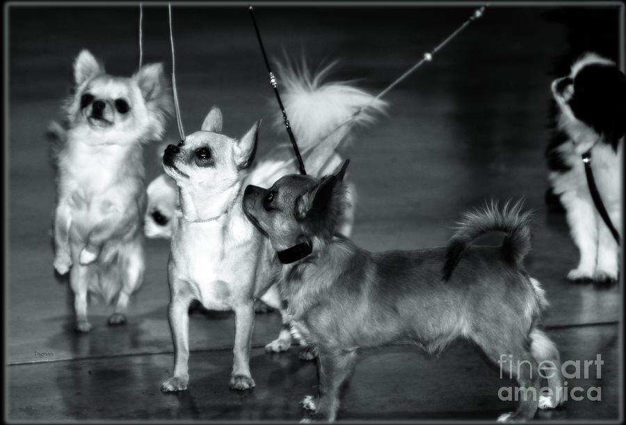 Circus Of Toys  Photograph