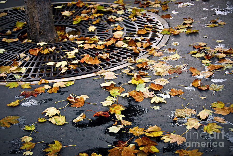 City Fall Photograph  - City Fall Fine Art Print