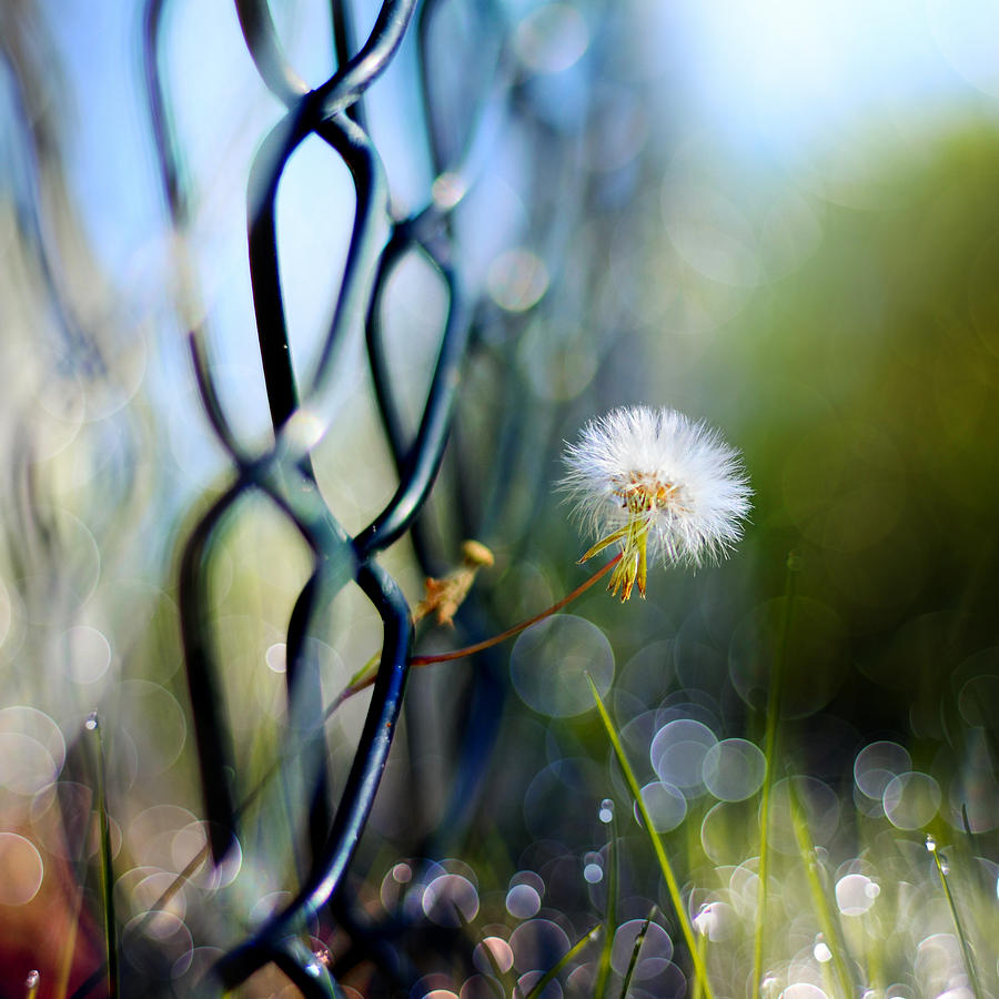 Whimsical Photograph - Clash Of The Titans by Laura Fasulo