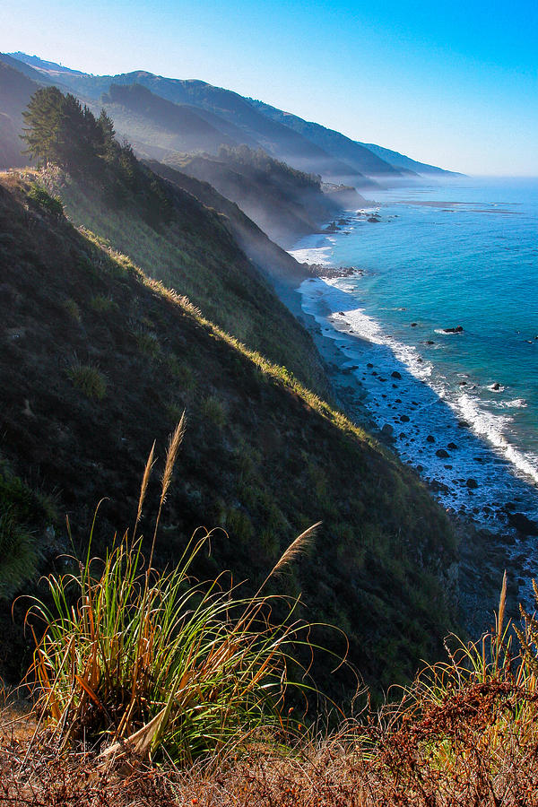 Cliff Grass At Big Sur Photograph