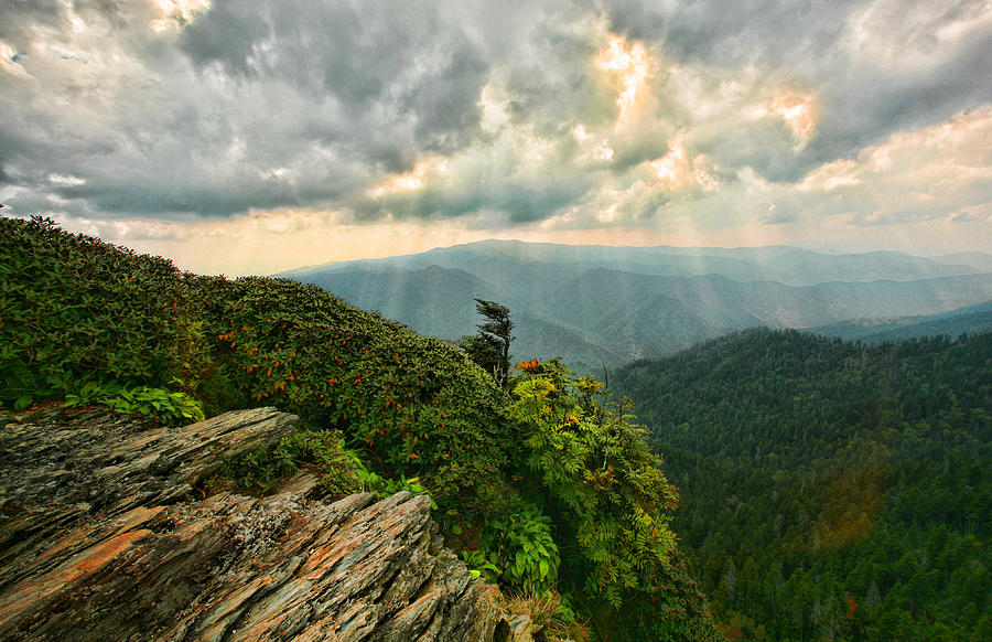 Cliff tops at mt leconte gsmnp photograph by shari jardina for Jardina