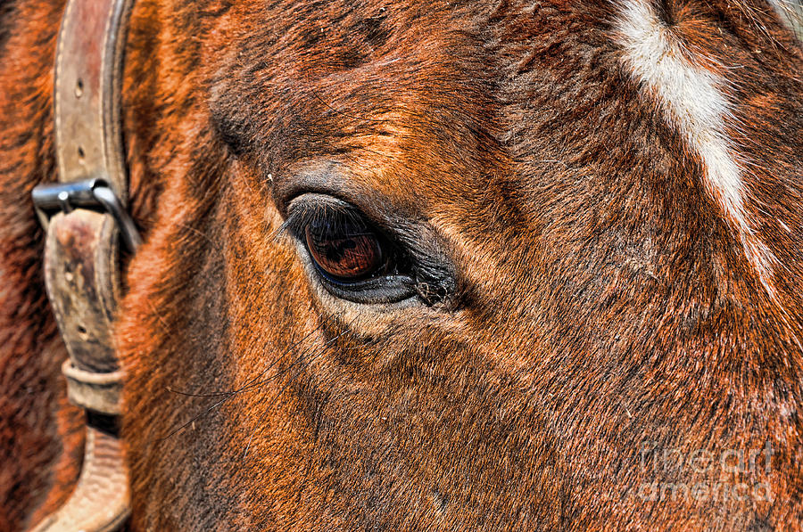 Close Up Of A Horse Eye Photograph  - Close Up Of A Horse Eye Fine Art Print