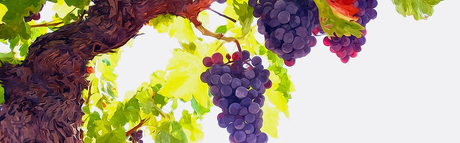 Close Up Of Red Wine Grapes Hanging On The Vine On A Sunny Day Painting