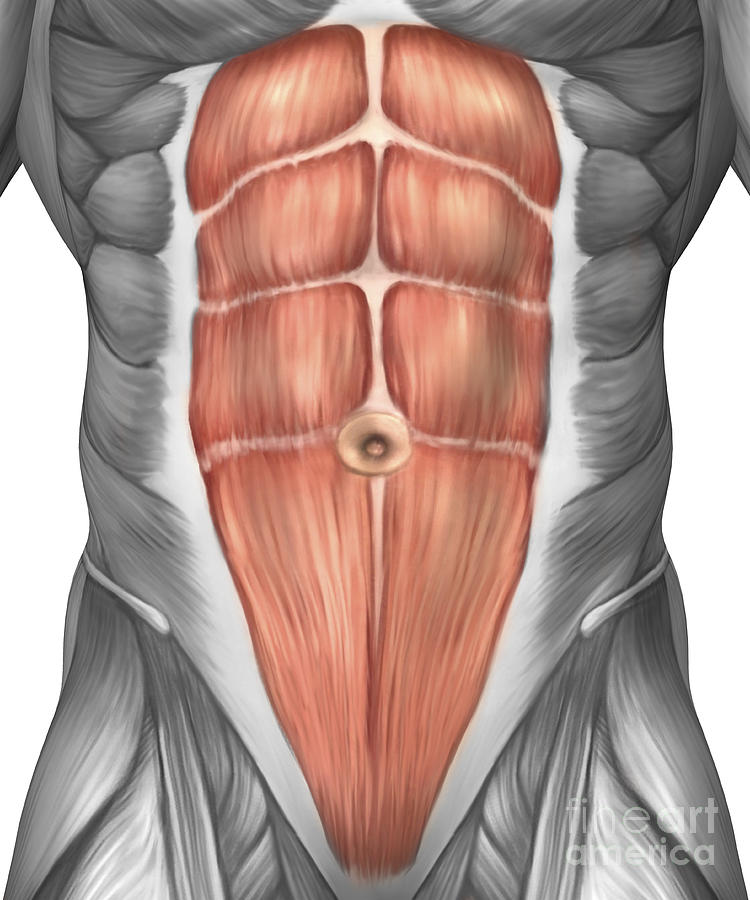 Close-up View Of Male Abdominal Muscles Digital Art