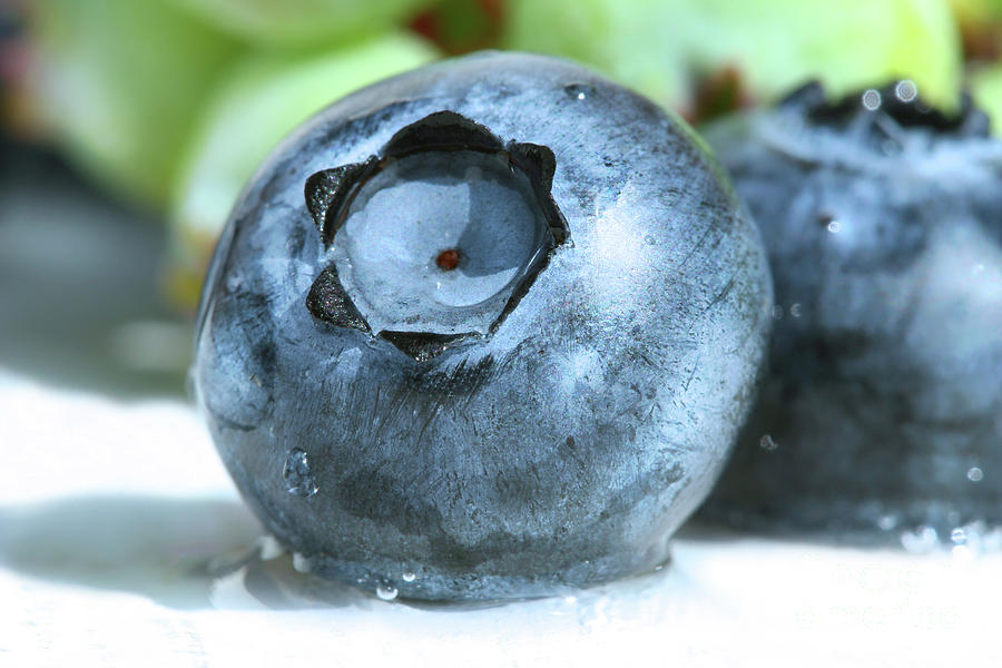 Closeup Of A Blueberry Photograph  - Closeup Of A Blueberry Fine Art Print