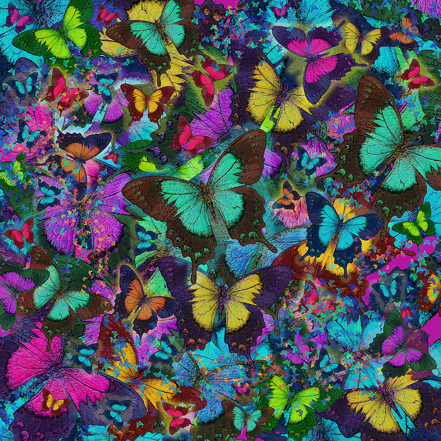 Cloured Butterfly Explosion Photograph