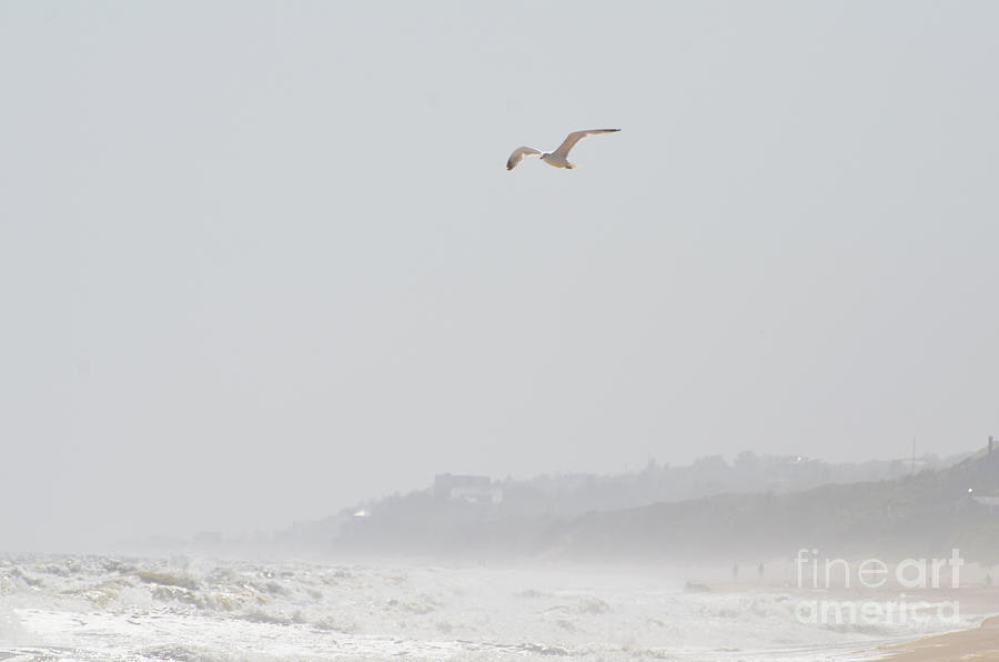 Coastal Beach Serenity Photograph  - Coastal Beach Serenity Fine Art Print
