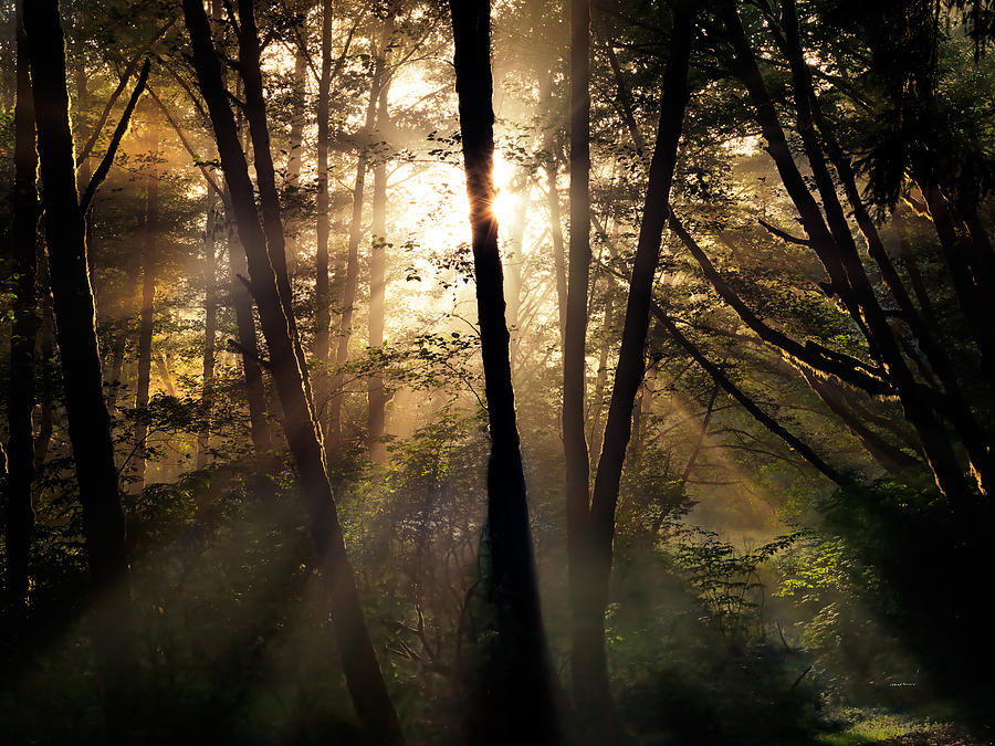 Coastal Forest Light Photograph