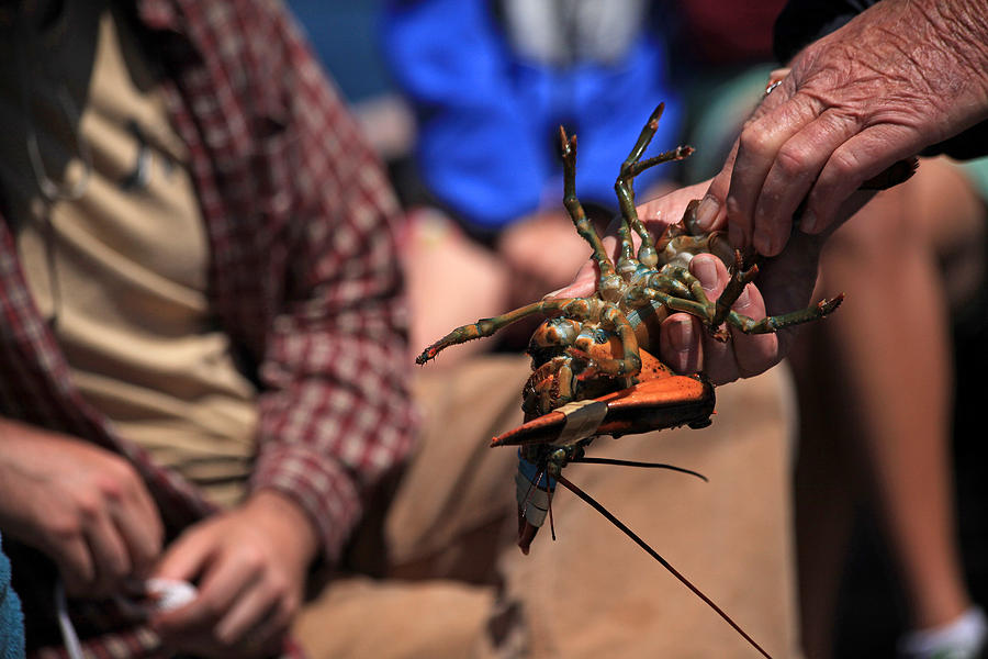 Coastal Maine Is Lobster Photograph
