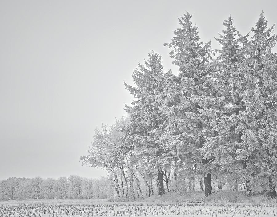 Cold Lace Photograph