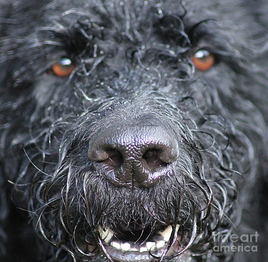 Dog Photograph - Cold Wet Nose by Michelle Orai