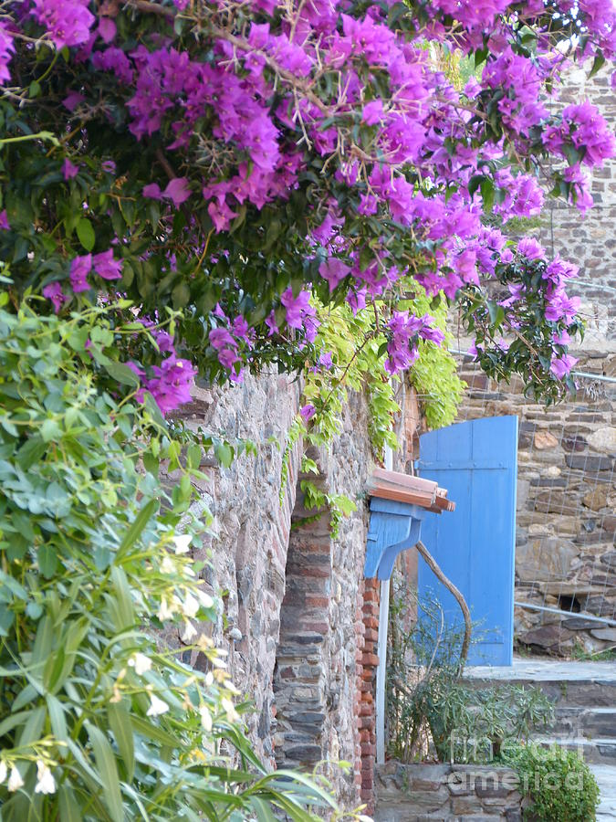 Collioure In Summer Photograph