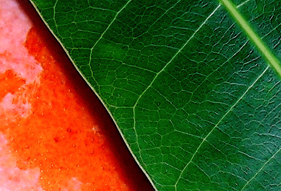 Color Me Mango Sweet And Spicy Photograph  - Color Me Mango Sweet And Spicy Fine Art Print
