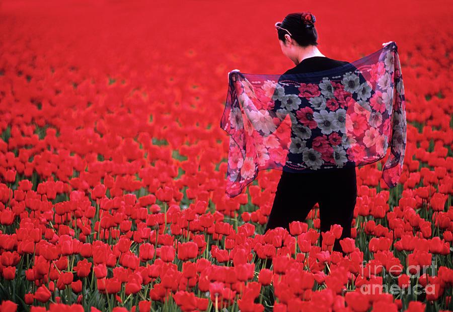 Color Me Tulip Photograph
