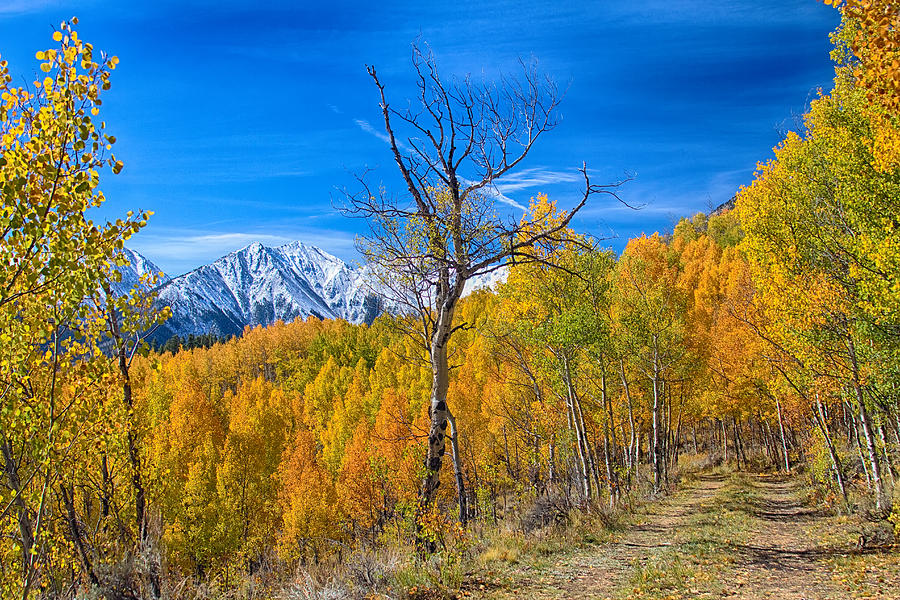 Colorado Fall Foliage Back Country View Photograph
