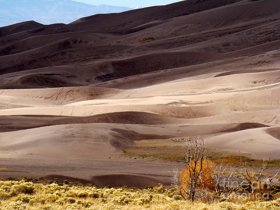 Landscape Photograph - Colorado Sand Dunes by Eva Kato