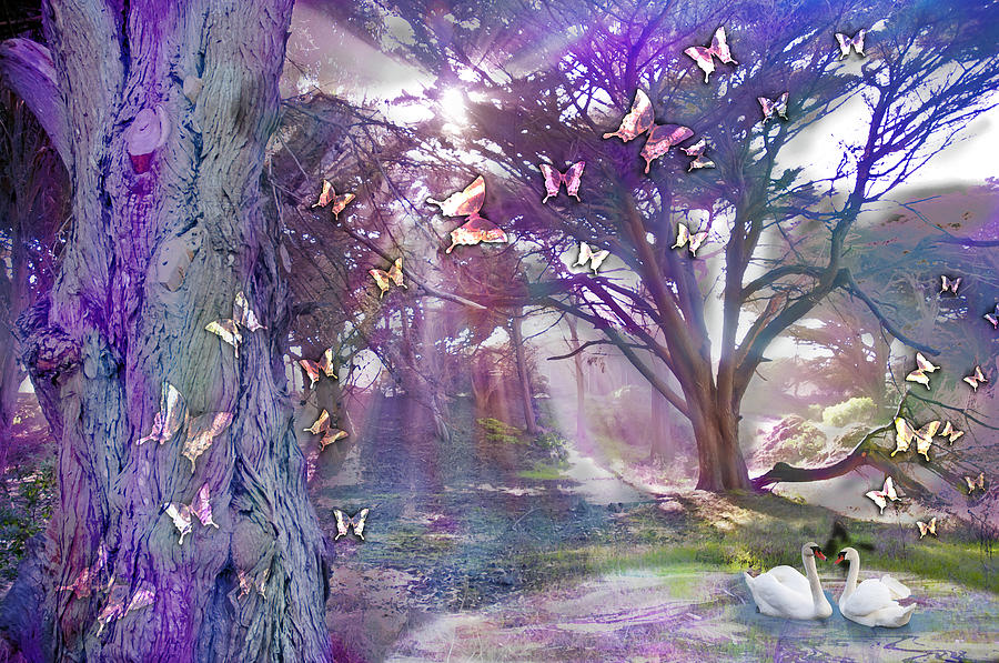 Colored Forest Photograph
