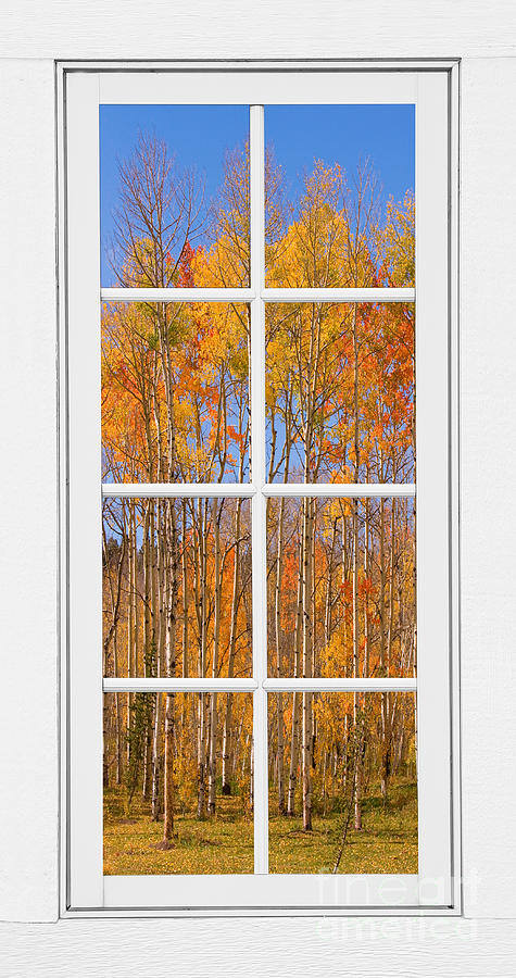Colorful Aspen Tree View White Window Photograph
