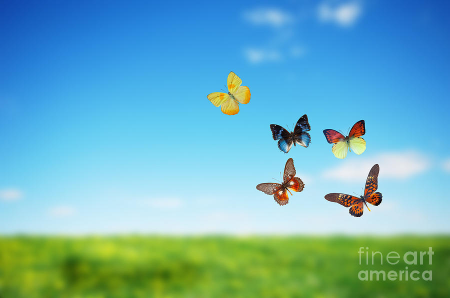 Colorful Buttefly Spring Field Photograph