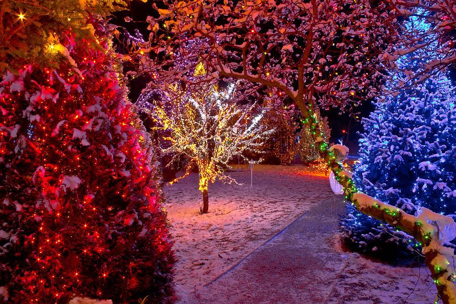 Colorful Christmas Lights On Trees Photograph