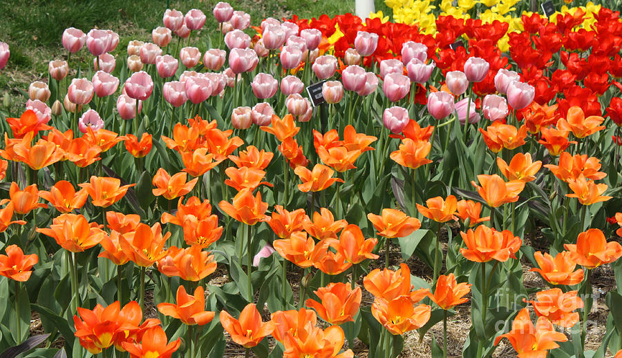 Colorful Flower Bed Photograph