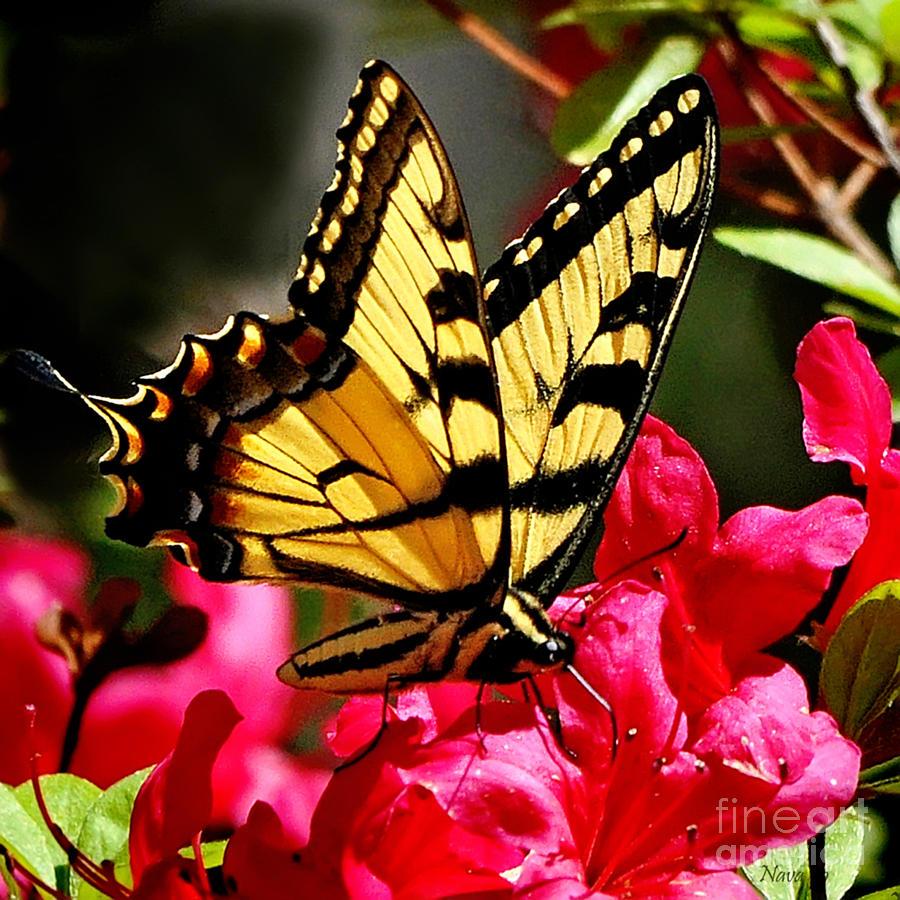 Nava Thompson Photograph - Colorful Flying Garden by Nava Thompson