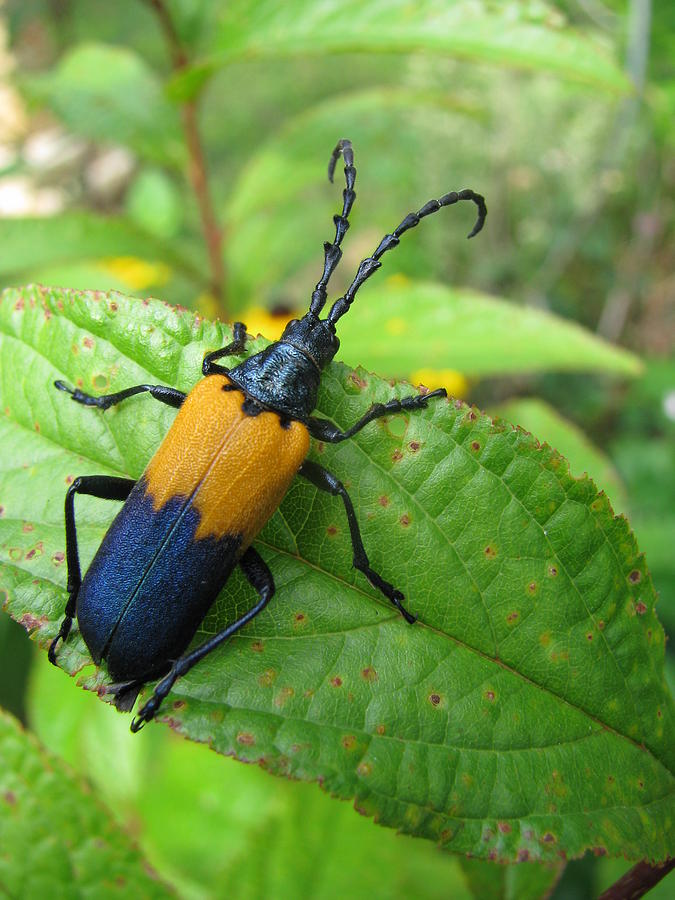 Colorful Insect Photograph
