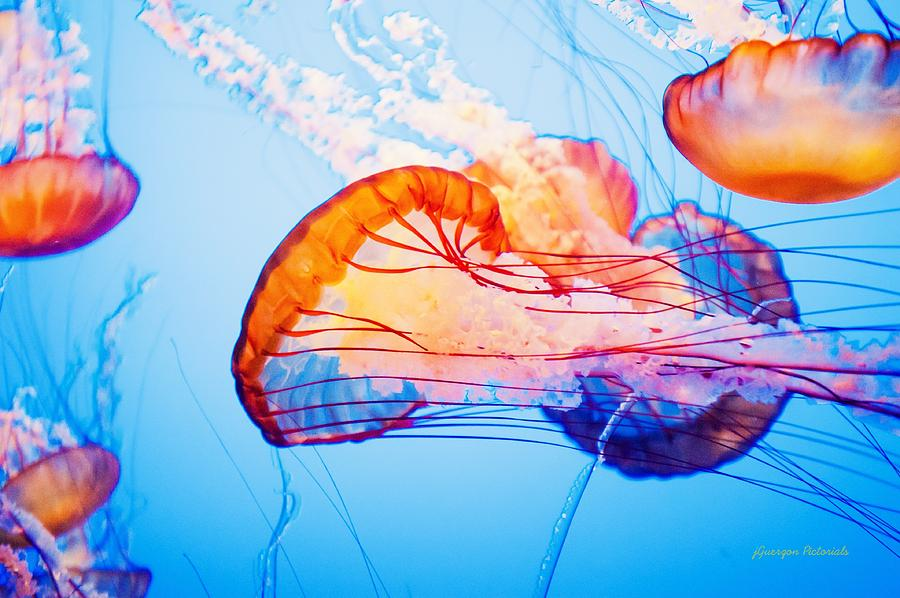 Colorful Jellyfish Dance I Photograph by Jorge Guerzon
