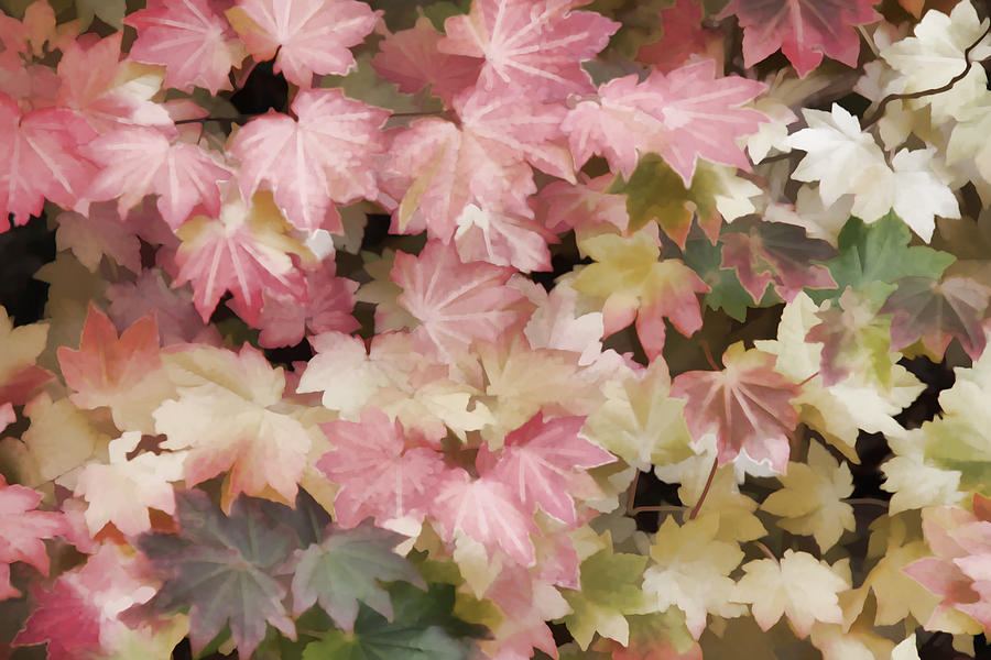 Colorful Kaleidoscope Of Maple Leaves Photograph