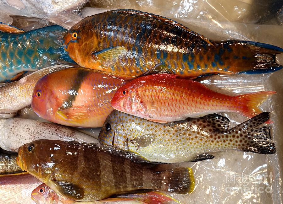 Colorful parrot fish for sale photograph by yali shi for Parrot fish for sale