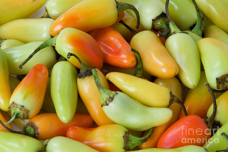 Colorful Peppers Photograph  - Colorful Peppers Fine Art Print