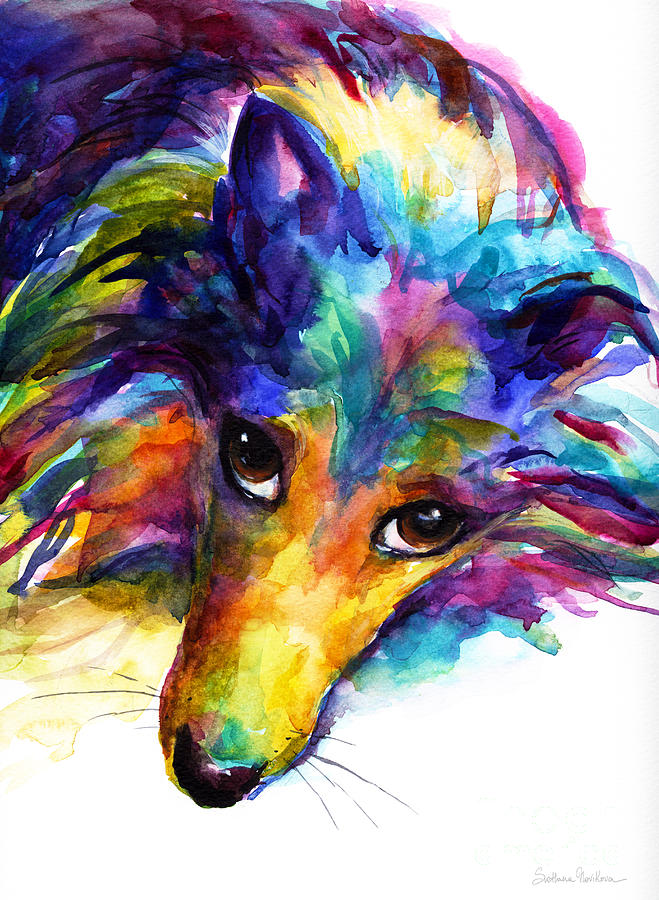 Colorful sheltie dog portrait painting by svetlana novikova for Dog painting artist