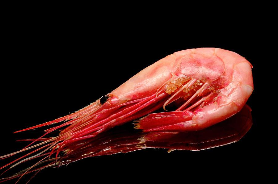 Colorful Shrimp Photograph