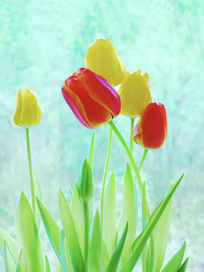 Colorful Spring Tulip Flowers Photograph