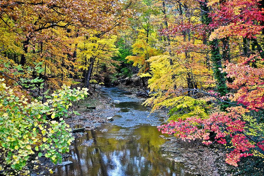 Colors Galore Photograph