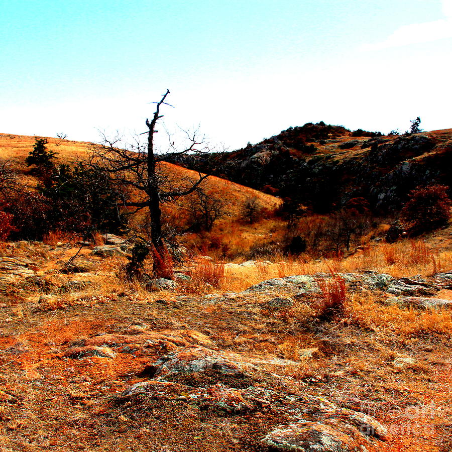 Landscape Photograph - Colors by Mickey Harkins