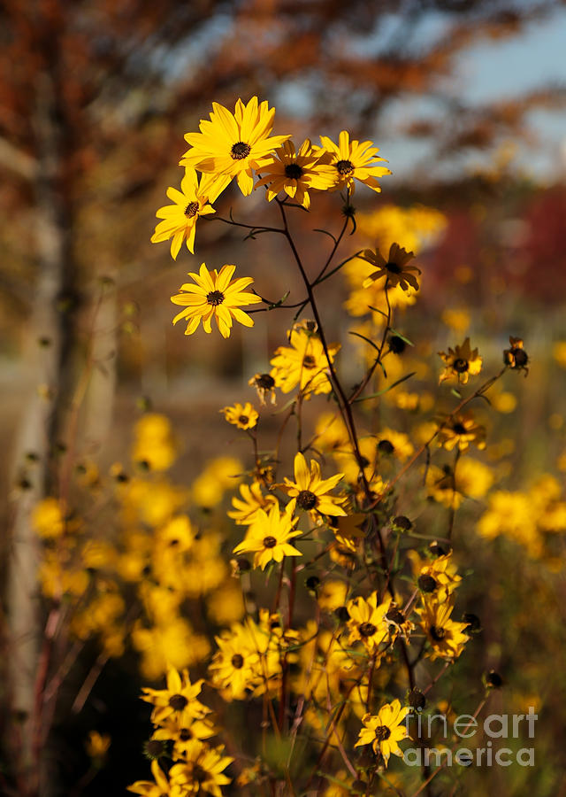Fall Photograph - Colors Of Autumn by Sabrina L Ryan