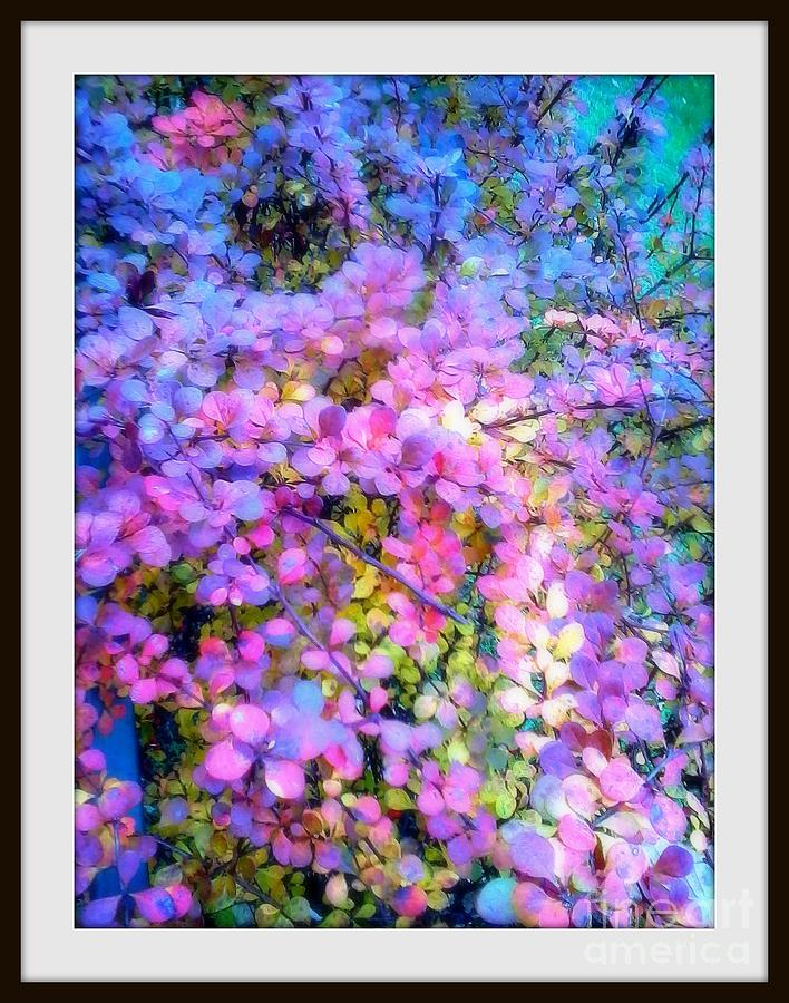 Colors Of The Rainbow Photograph  - Colors Of The Rainbow Fine Art Print