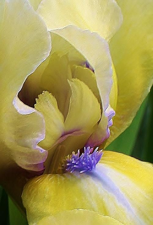 Come A Little Closer Photograph  - Come A Little Closer Fine Art Print