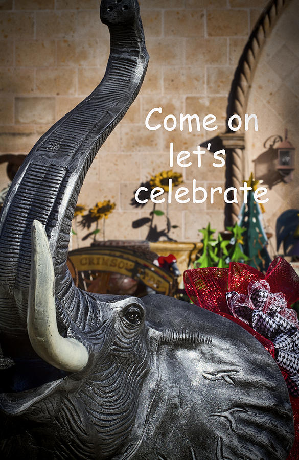Come On Lets Celebrate Photograph  - Come On Lets Celebrate Fine Art Print