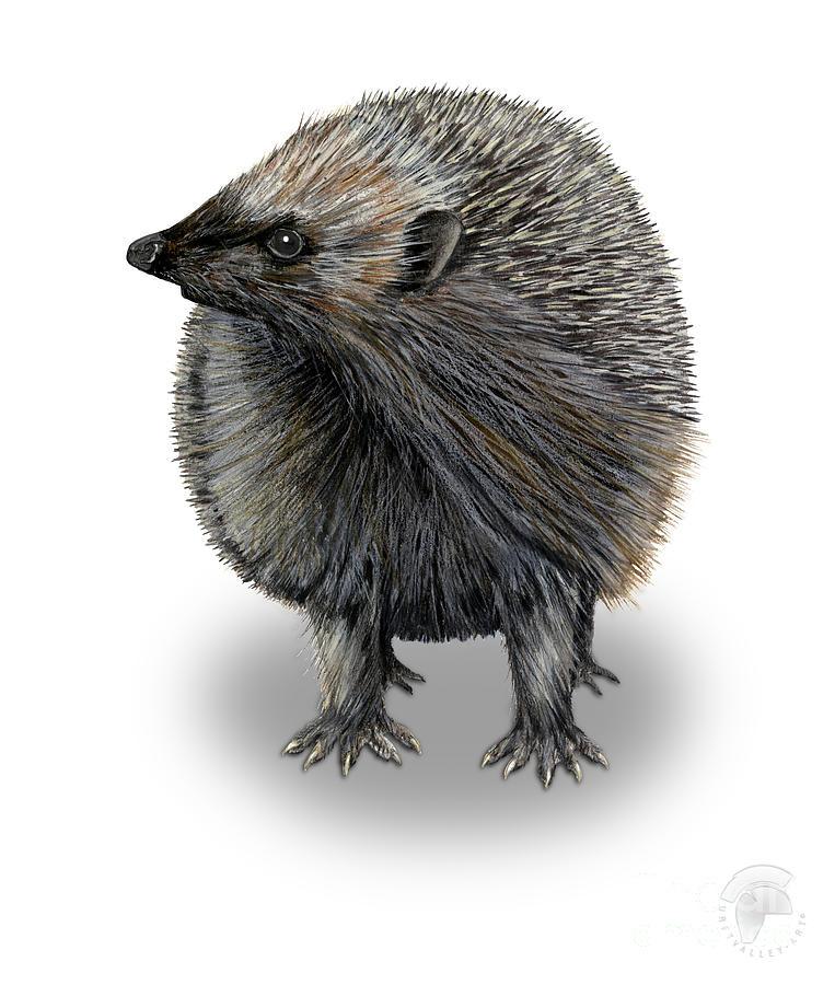 Common Hedgehog  Erinaceus Europaeus -herisson-erizo- Ourico Cacheiro-riccio-eurooppalainen Siili Painting