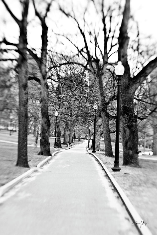 Commons Park Pathway Photograph
