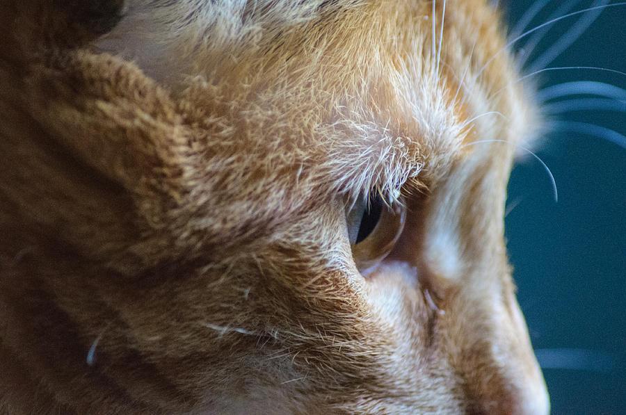 Cat Photograph - Concentration by Tikvahs Hope