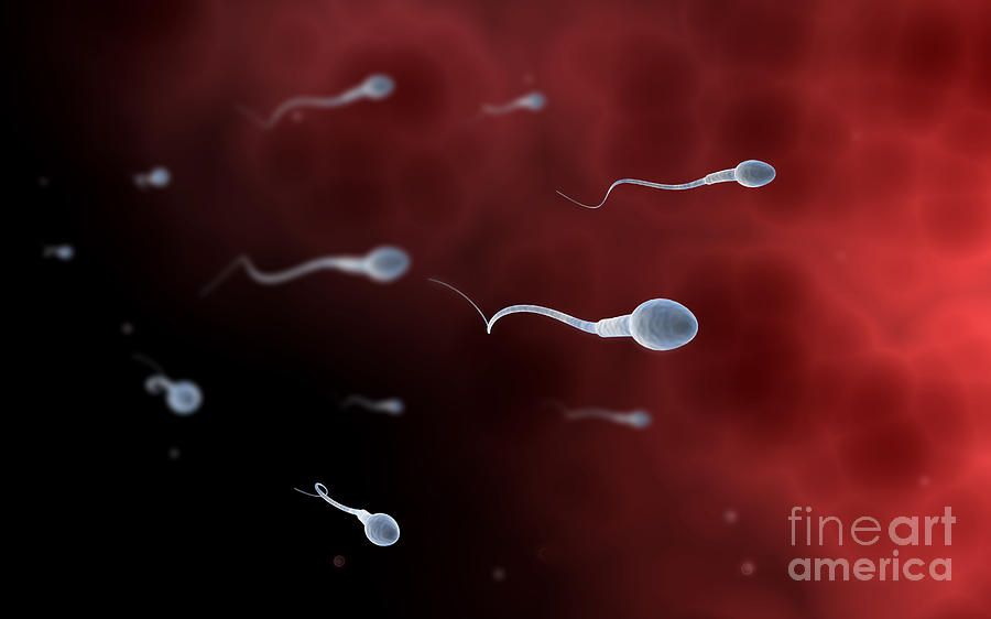 Conceptual Image Of Sperm Digital Art  - Conceptual Image Of Sperm Fine Art Print