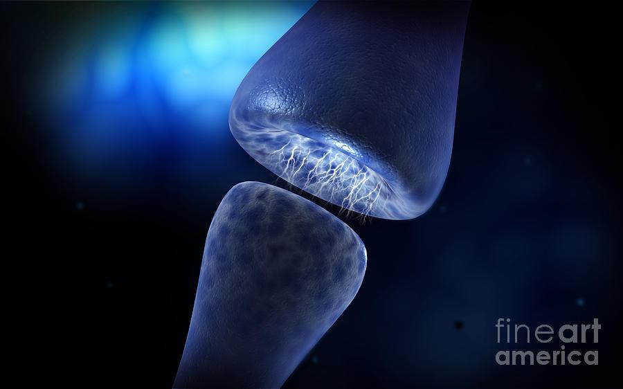 brainbow synapse - photo #33