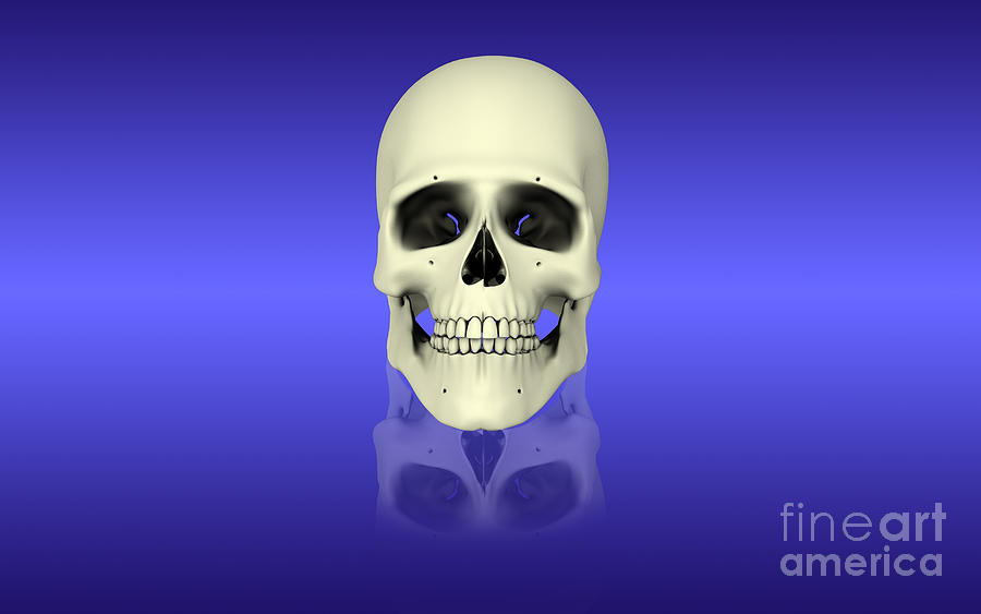 Conceptual View Of Human Skull Digital Art  - Conceptual View Of Human Skull Fine Art Print