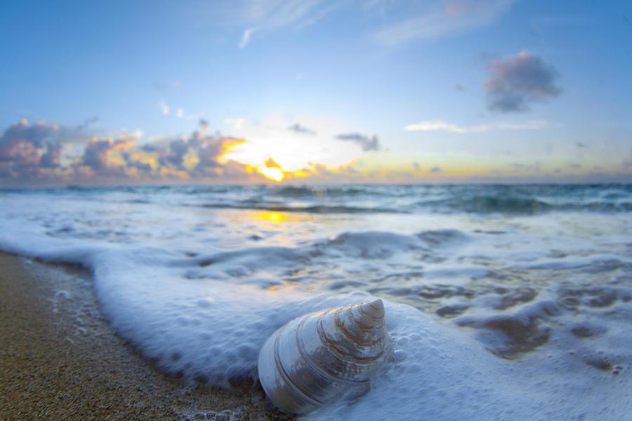 Cone Shell Foam Photograph