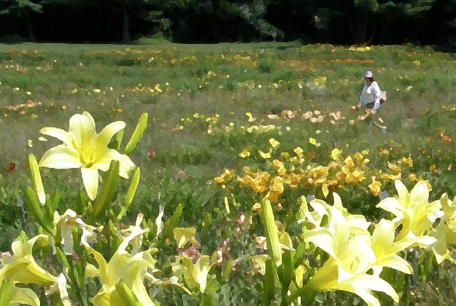 Impressionist Photograph - Consider The Lilies Of The Field by Jean Hall
