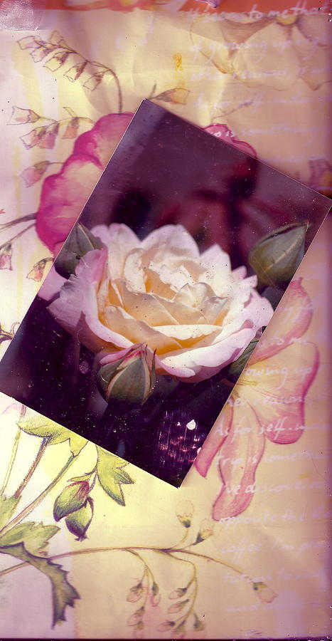 Continuation From Print To Photo Of White Rose Photograph